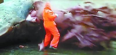 抹香鲸爆炸原因 抹香鲸爆炸图片